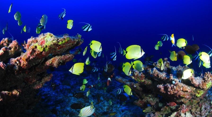 Avances. Investigadores israelíes desarrollaron una nueva plataforma para evitar la extinción de los corales