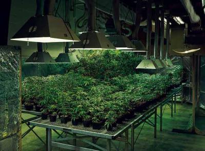marihuana_legal