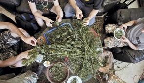 marihuanaa