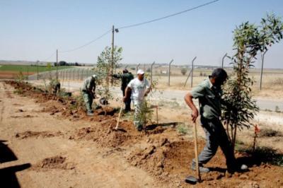 plantar_arboles