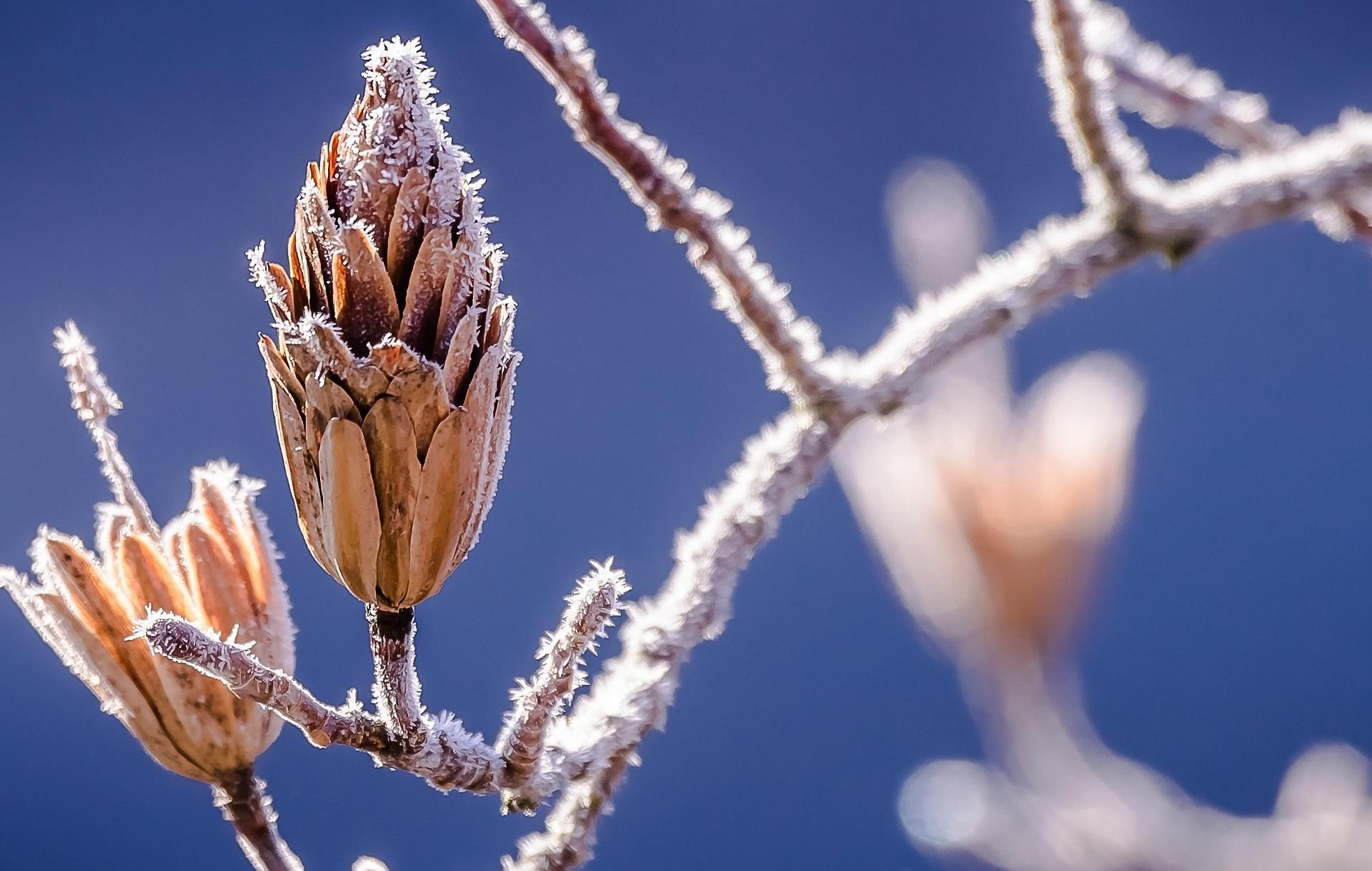 winter-nature-bud-branch-39677