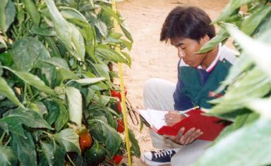 cultivo arava
