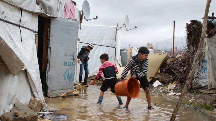 פליטים