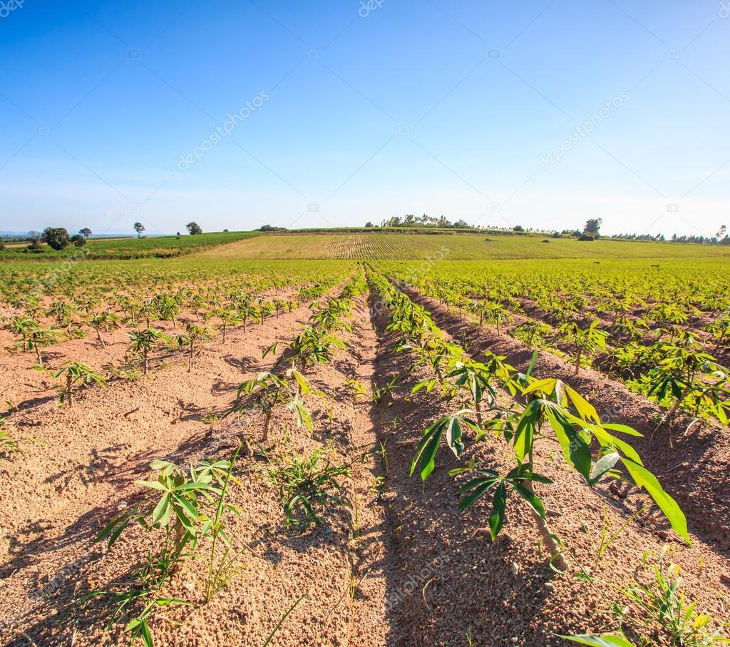 tailandia agricultura 2