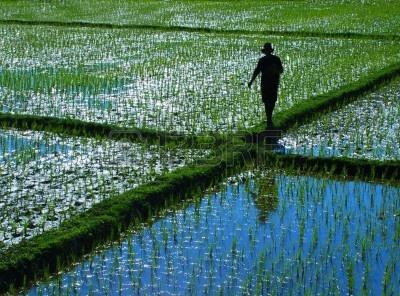 tailandia agricultura