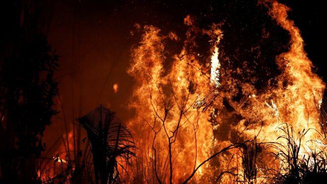 amazonas incendio