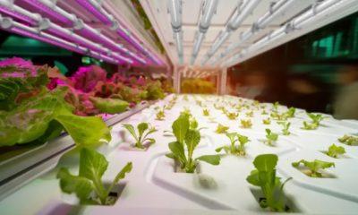 led cultivos