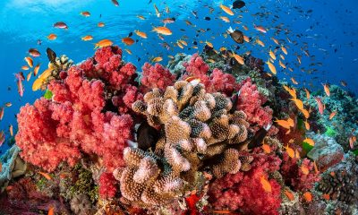 coral-reefs