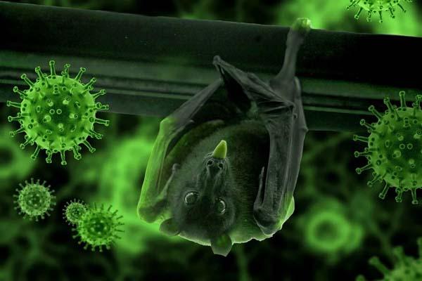 covid bat