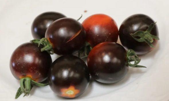tomate negro 2