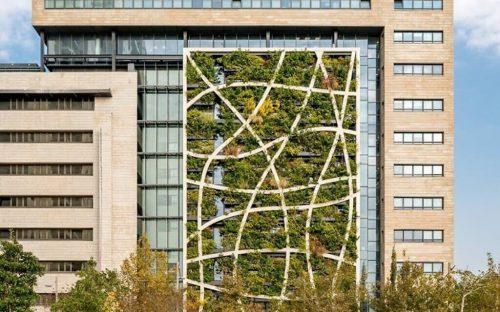 Vertical-field1-green-wall