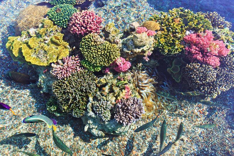 corales-de-color-en-eilat