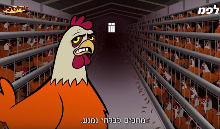 El Ministerio de Agricultura israelí realizó una campaña en contra del ritual de kaparot